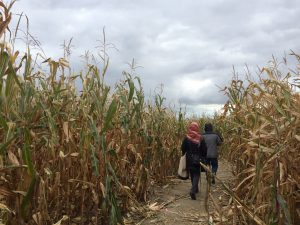 At Blake's Apple Orchard, another popular orchard, people can choose to go through a corn maze. The maze is out on an open field, surrounded by corn stalks and scarecrows.
